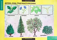 Плакат Дерева, кущі, трав'янисті рослини