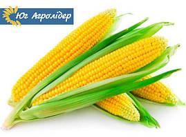 Семена кукурузы НС 3023 Юг Агролидер