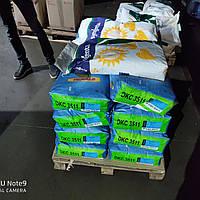 Монсанто ДКС 3511 гибрид кукурузы ФАО 330 Monsanto насіння кукурудзи