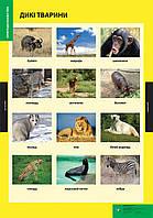 Плакат Дикі тварини