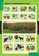 Плакат Мішані та широколисті ліси