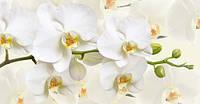 Фотообои Белая орхидея №49