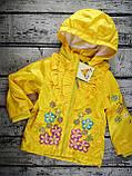 Куртка. Вітровка для дівчаток Жовтий Поліестер Baby Line Україна, фото 3