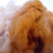 Чому шерсть викун'ї найдорожча в світі