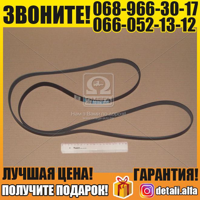 Ремень поликлиновый 6PK2404 (пр-во DONGIL) (арт. 6PK2404)