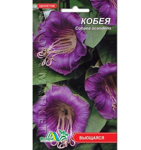 Кобея фиолетовая цветы вьющееся однолетние, семена 0.3 г