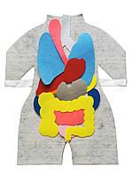 Модель-фартух HEGA Внутрішня будова тіла людини