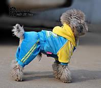 Спортивный костюм для собак №82. Одежда для собак.