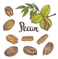 Руководство по выращиванию орехов пекан
