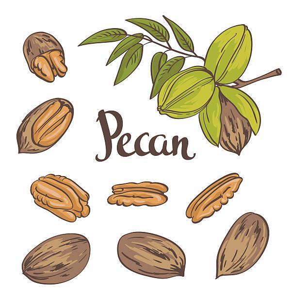 Інструкція з вирощування горіхів пекан
