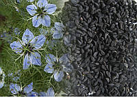 Семена Черный тмин 1кг