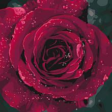 Набор для рисования картины по номерам Роза ТМ Идейка  40 х 40 см КНО3038