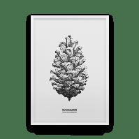 Постер на стену Strobilus