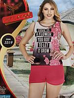 Комплект двойка шорты майка турецкий трикотаж Night Angel