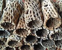 Трубка из кактуса Cholla Чолла широкая декор для аквариума кружевная 10 см SK21037