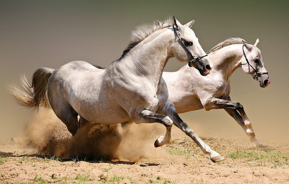 КДИ-0931 Набор алмазной вышивки Пара бегущих лошадей-2