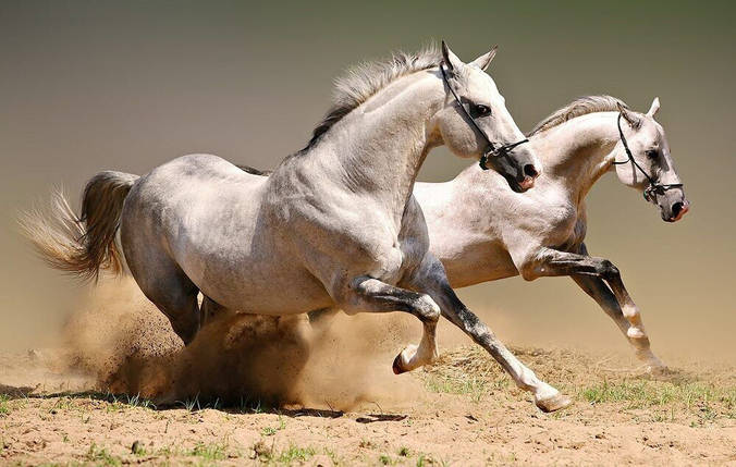 КДИ-0931 Набор алмазной вышивки Пара бегущих лошадей-2, фото 2