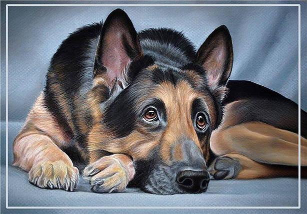 КДИ-0934 Набор алмазной вышивки Грустный пес, фото 2