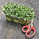 Набор для выращивания микрозелени в домашних условиях. Горох, Редиска, Кресс-салат, фото 4