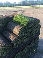 Рулонный газон Днепр