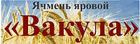 Шестирядний сорт ячменю ВАКУЛА Еліта Семена ярого ячменю Вакула Еліта