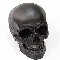 Череп модель черного цвета, гипсовый, декоративный, в натуральную величину, фото 1