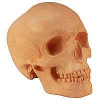 Череп людини, модель з гіпсу, оранжевий, пісочний, натурального анатомічного розміру, для декорування