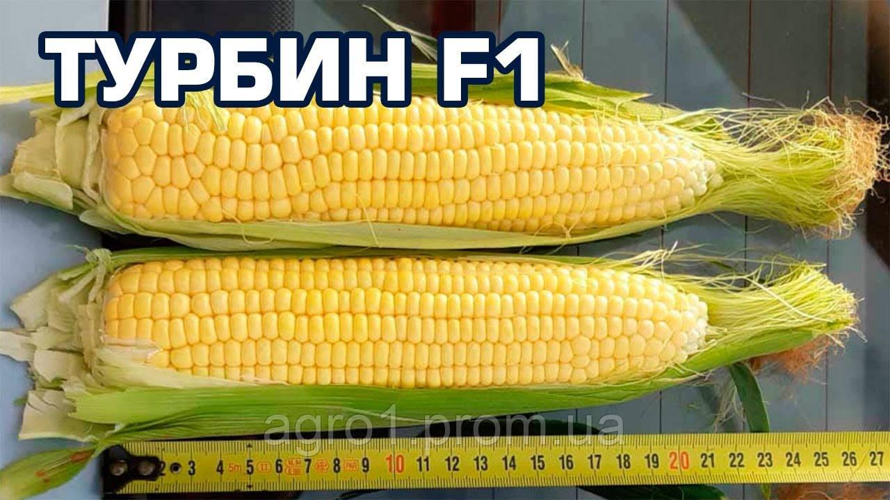 Семена Кукурузы ТУРБИН F1 Clause 5000с