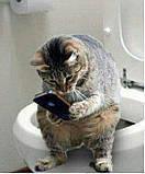 Як облаштувати котячий туалет