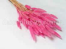 Лагурус - сухоцвет цветной, розовый (упаковка - 10 веточек)
