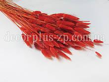 Лагурус - сухоцвет цветной, терракот (упаковка - 10 веточек)