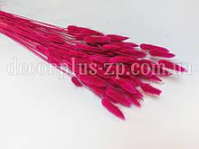 Лагурус - сухоцвет цветной, малиновый (упаковка - 10 веточек)