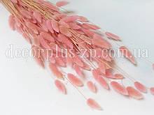 Лагурус - сухоцвет цветной, светло-розовый (упаковка - 10 веточек)