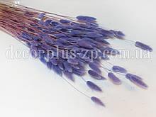 Лагурус - сухоцвет цветной, светло-фиолетовый (упаковка - 10 веточек)