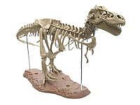 Модель скелета тиранозавра Рекса 4D 65 деталей 70 см