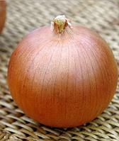 Лук репчатый Blooster F1 (Блустер) - Seminis, уп. 250 000 семян