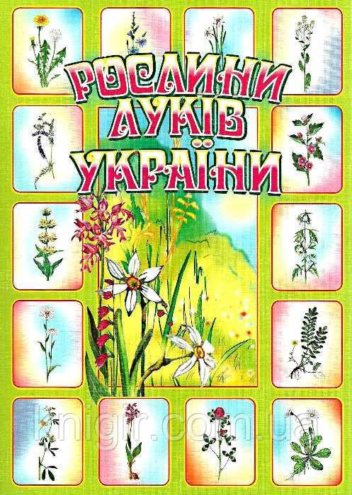 Рослини луків України (Комплект наочності)