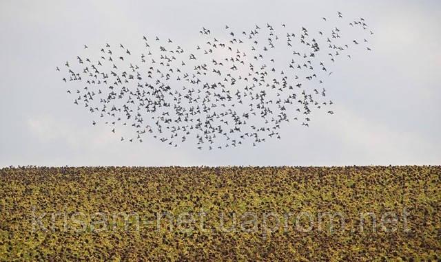 На сколько эффективны отпугиватели птиц ?? Отпугиватель птиц идеальное средство защиты от птиц. Купить Украина. Отзывы.