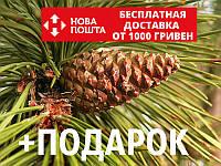 Сосна чёрная австрийская семена (50 шт) (Pinus nigra) для выращивания саженцев + подарок