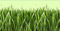 Рулонный газон Премиум класса PICKSEED от производителя