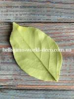 Молд лист Яблони реалистичный 6,8см х 4см