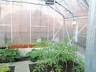 Вирощування часнику в теплиці
