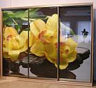 Шкаф купе Модерн 2700х600х2400 Алекса мебель, фото 2