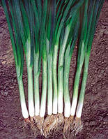 Лук на перо Green Banner  (Грин Баннер) - Seminis, уп. 100 000 семян