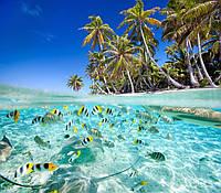 Панама,Белиз,Сейшелы,Британские Виргинские Острова(BVI)
