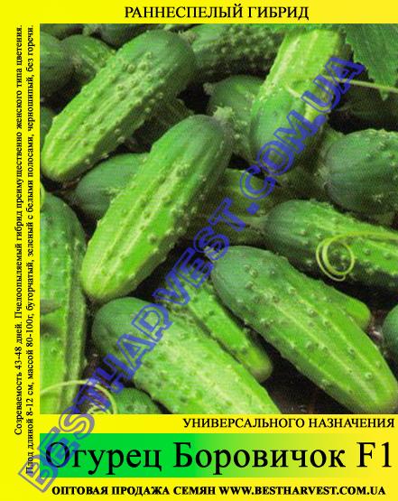 Семена огурца Боровичок F1 5 кг (мешок)