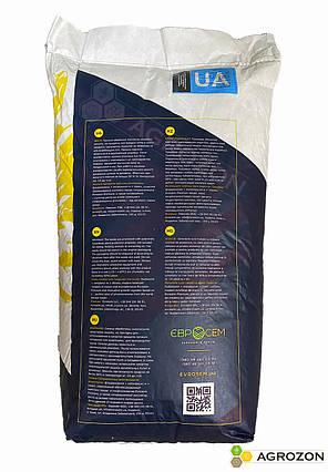 Семена подсолнечника Грифон (Grifon) Premium (NS 7640) Евросем  - 1 п.о., фото 2