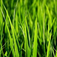 Отдушка 15 мл, Травянистая