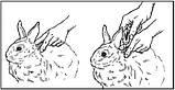 Краплі від бліх Адвантікс ® Advantage Bayer для котів і кролів понад 4 кг 1 піпетка, фото 3
