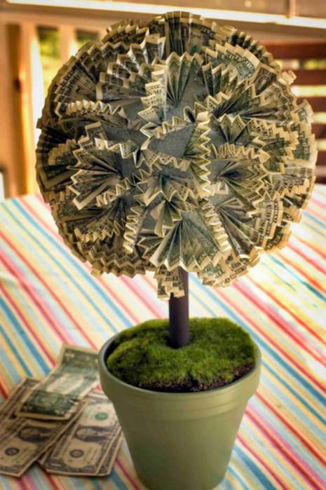 пышное денежное дерево